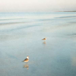 Two Birds on Beach