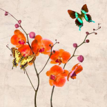 Orchids and Butterflies I