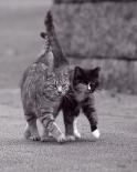 Ballade de chatons