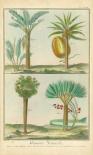 Histoire Naturelle Tropicals I