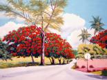 Poncianna Drive