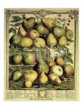 Fruits of the Season - Spring