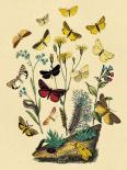 Moths: C. Miniata, S. Aurita, et al.