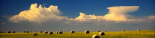 Prairie Haybales