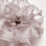 Blossom [One]
