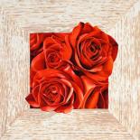 French Roses I