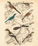 Avian Habitat V