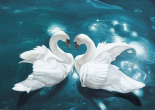 Swans in Love II