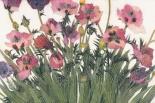 Spring Poppies IV