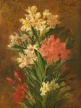 Rot und weiss bluhender Oleander