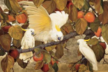 Persimmons and Cockatoos