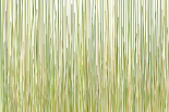 Grass Curtain