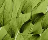 Tulip Petals - Green