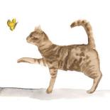 Curious Felines 5