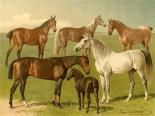 Horse Breeds I