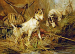 Two Smooth-Haired Fox Terriers