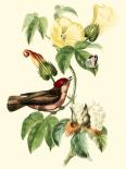 Cuvier Exotic Birds I