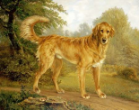 A Golden Retriever On a Path
