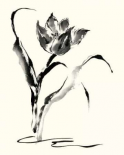 Studies in Ink - Tulip