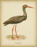 Non-embellished Vintage Heron I