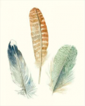 Watercolor Feathers IV