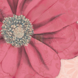 Grandiflora IX