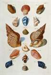 A Selection of Seashells