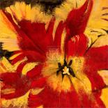 Rosso Fiore I