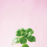 Succulent Simplicity VII on Pink