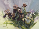 Hadfield Irises IV