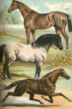Johnsons Horse Breeds I