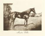 Master Willie