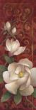 Magnolia Melody II