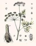 Berge Botanicals I