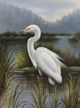 Morning Egret