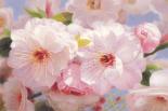 American Flowers I