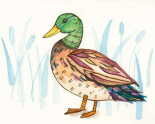 Wetland Mallard I
