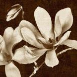 Soul Blossom 1-Sepia