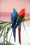 Palm Parrots