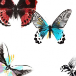 Butterflies Dance I