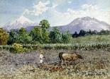 Campesino Arando