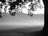 Fog in the Park I