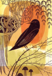 Doodle Bird 1