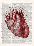 Vintage Anatomy Heart