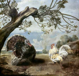 Cock and Turkey
