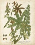 Weinmann Tropical Plants I