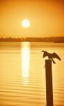 Bird Watch on the Lake