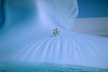 Adelie Penguin pair on iceberg, Antarctica