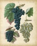 Calwer Grapes I