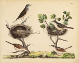 Wrens, Warblers and Nests I
